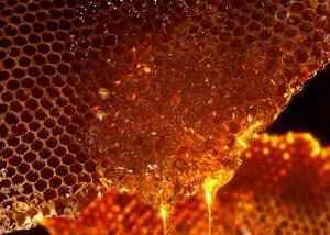 Honeycomb with honey (http://imgarcade.com)